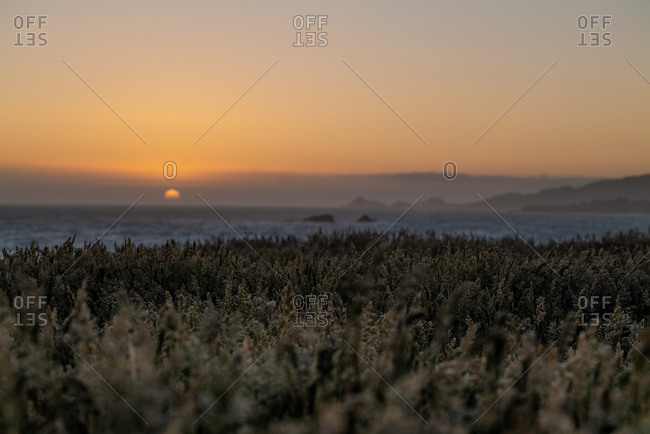 Sun setting behind field of tall grass over looking Pacific Ocean