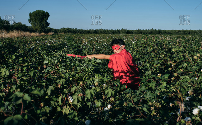 Child disguised as a red superhero enters cotton fields ready to fight