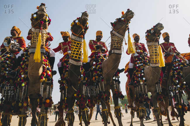 Rajasthan, India - January 29, 2018: Group of decorated camels with their Rajasthani man riders in the Jaisalmer Desert Festival