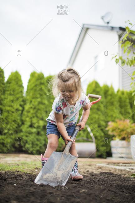 Cute blonde toddler using shovel in her backyard.
