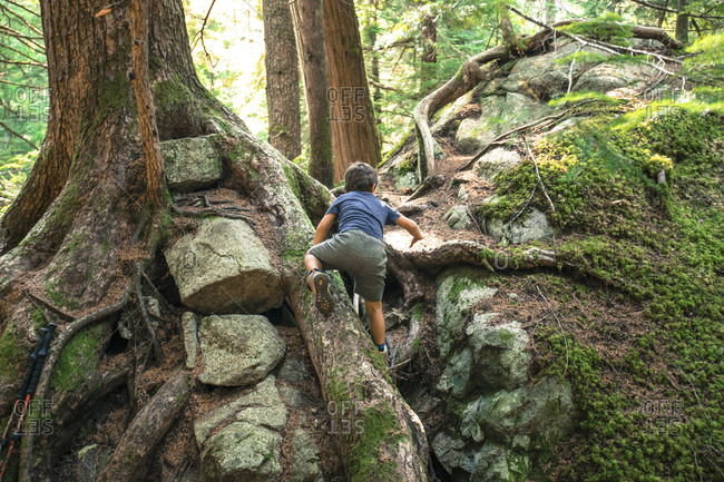 Young boy climbing up tree roots and rocks in the wilderness.
