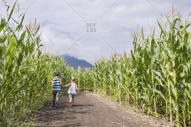 Rear view of young boy and girl holding hands exploring corn maze.
