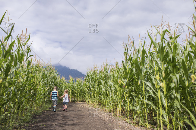 Young boy and girl holding hands while in corn maze.