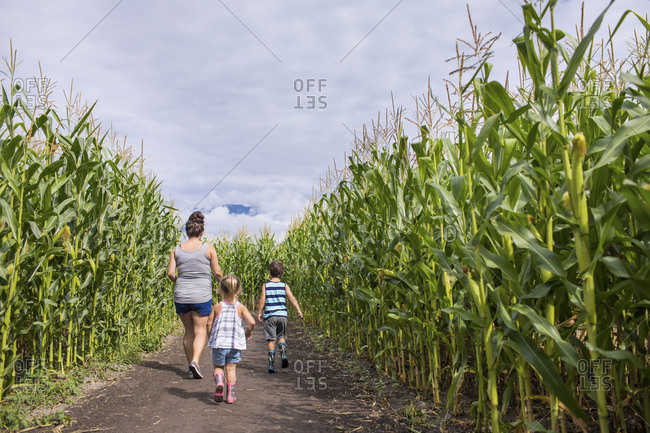 Mother walks through corn maze with her son and daughter