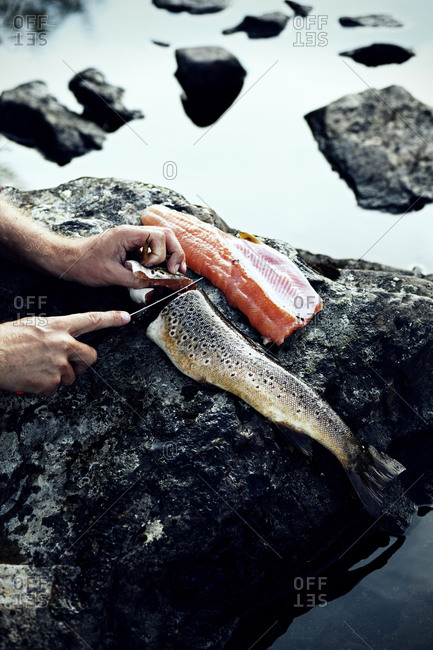 Fisherman cleans fish on a rock in the river