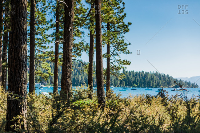 Pine Forest with Boats on a Mountain Lake with Blue Skies
