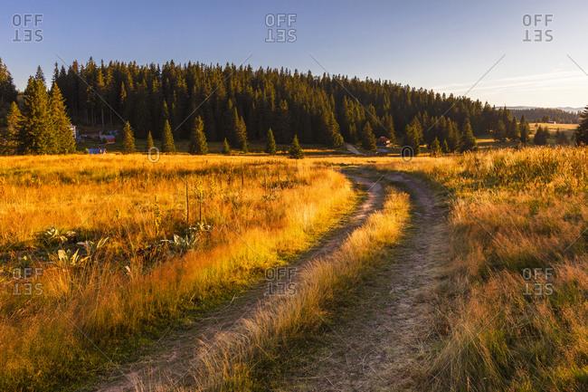 Path through a sunny meadow