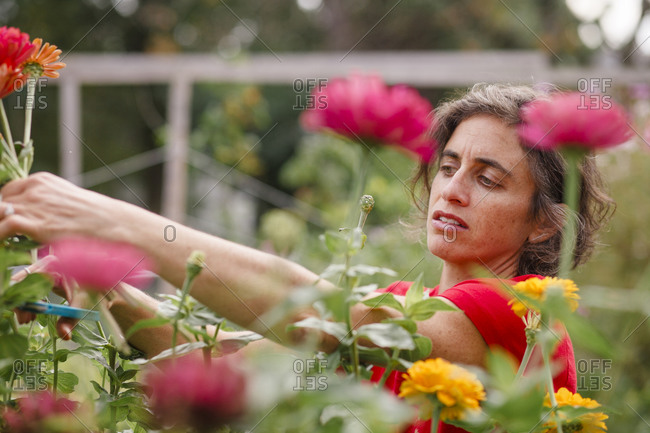 A woman stands among wildflowers cutting stems with a scissors