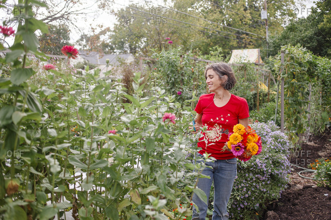 A smiling woman cuts a large bouquet of zinnias from a flower garden