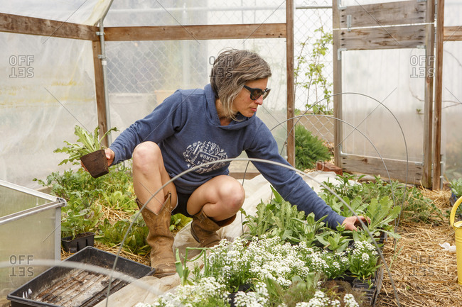 A woman tends to young plants in a greenhouse in springtime