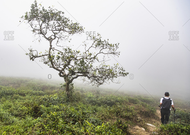 Woman hiking in the mist of the Sri Lankan highlands