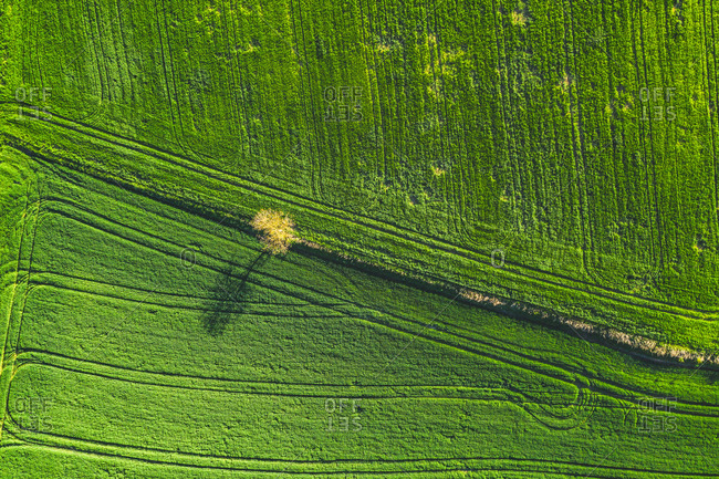 Aerial view of lone tree among green grass field in Arbesbach, Austria