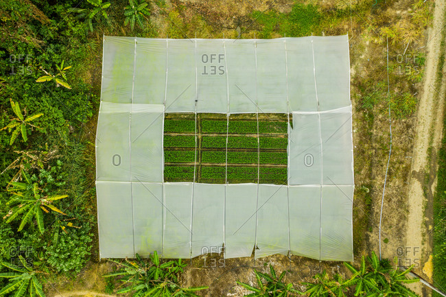 Aerial view of plant nurseries surrounded by trees in Ceara, Brazil.