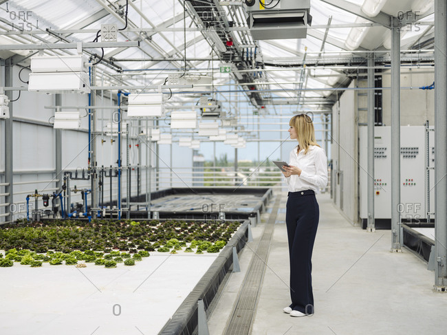 Businesswoman with digital tablet examining plants in greenhouse