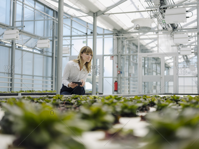 Businesswoman holding digital tablet examining plants in greenhouse