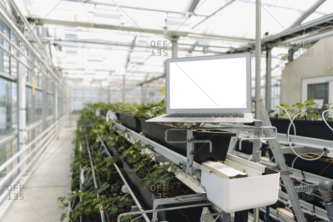 Laptop on rack against plants in greenhouse
