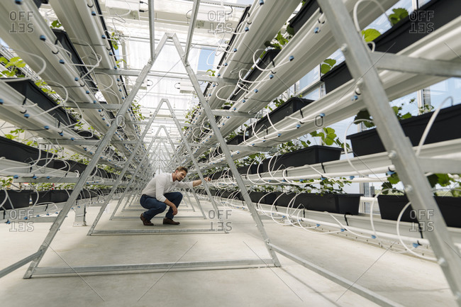 Businessman examining plants growing in greenhouse