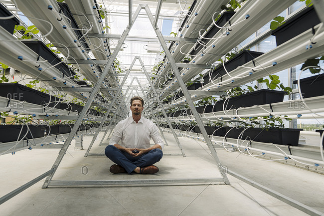 Businessman meditating while sitting amidst plants in greenhouse