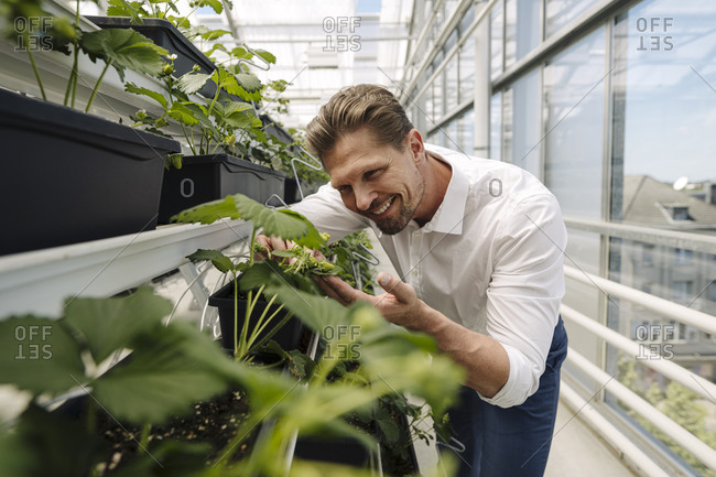 Smiling male entrepreneur examining plants in greenhouse