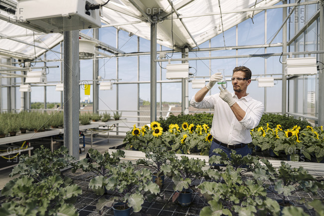 Male scientist holding conical flask while standing amidst plants in greenhouse