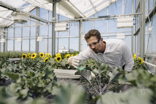 Male scientist holding conical flask while examining plants in greenhouse