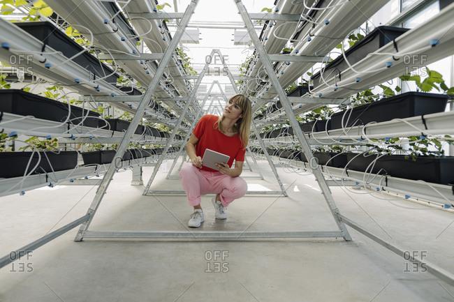 Female entrepreneur with digital tablet looking away while crouching by plants in nursery