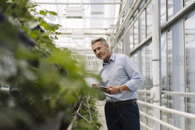 Male professional with digital tablet analyzing plants in greenhouse