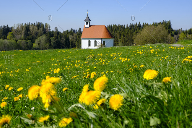 Germany- Bavaria- Sulzberg- Springtime meadow in front of Marienkapelle