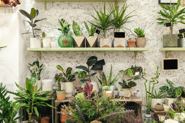 Plant arrangement at flower shop