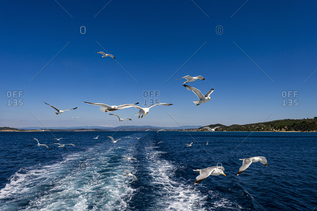 Flock of seagulls flying over blue sea water in summer
