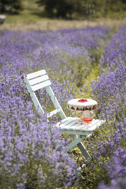 Carrot cake with raspberries and a fruity drink on a white wooden, chair in a lavender field