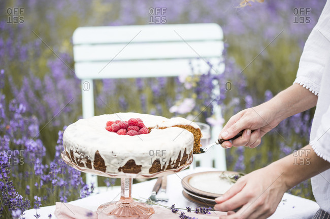 Woman serving carrot cake with raspberries on a table in a lavender field