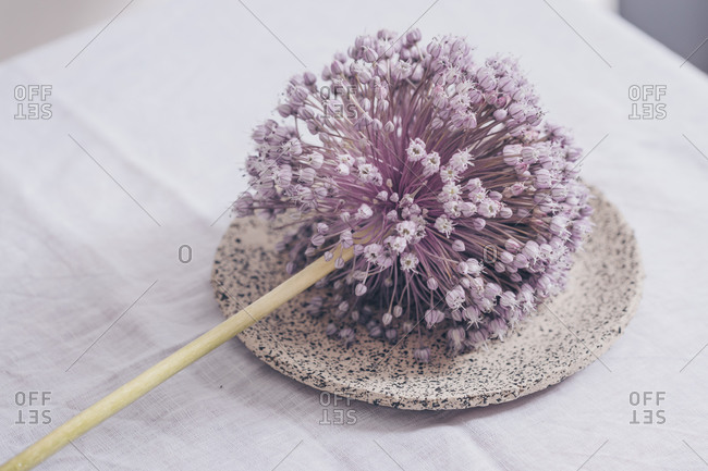Single onion flower on a handmade plate on the white table