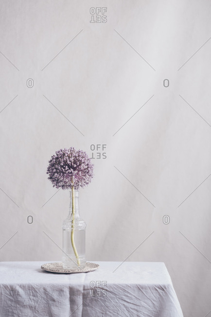 Purple onion flower in a vase on a table