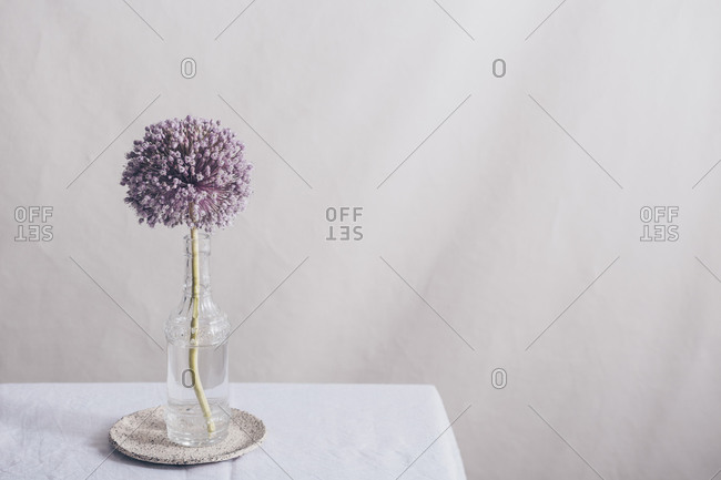 Purple onion flower in a glass vase on a table with copyspace