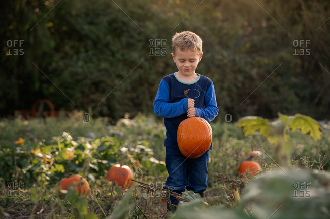 Blonde boy carrying a pumpkin patch in autumn at sunset