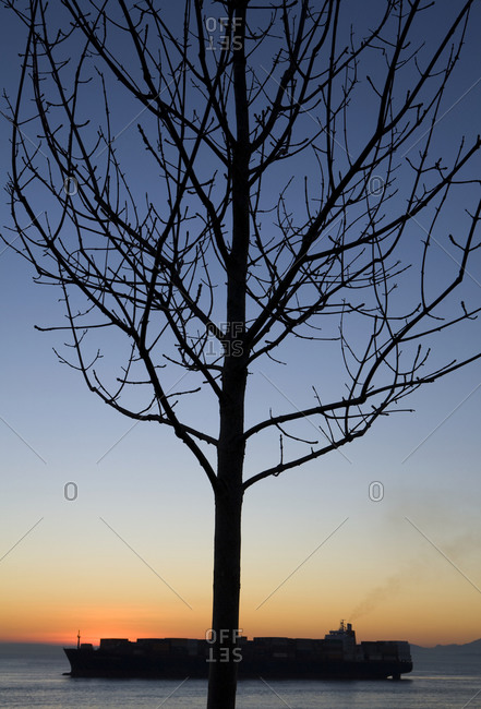 Bare branches of a tree at sunset, commercial freight ship on the water
