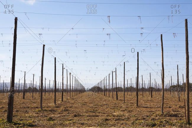 Set of tall posts arranged in rows, with overhead wires, and worked soil, agriculture