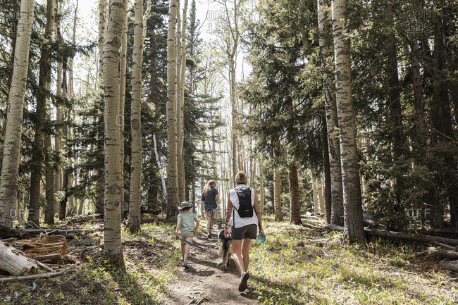 Family hiking in a forest of Aspen trees