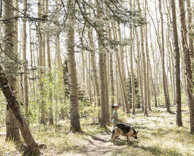 7 year old boy walking his dog in forest of Aspen trees
