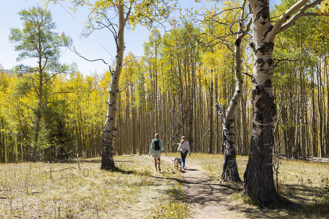 mother and daughter walking their dogs on autumn aspen nature trail