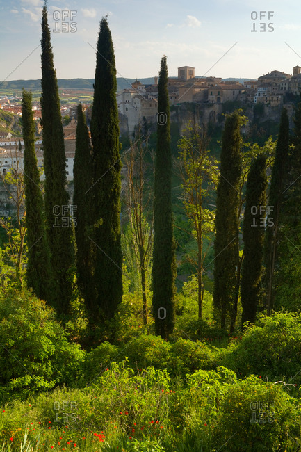 Tall Cypress trees in Cuenca, a historic walled town in Spain.