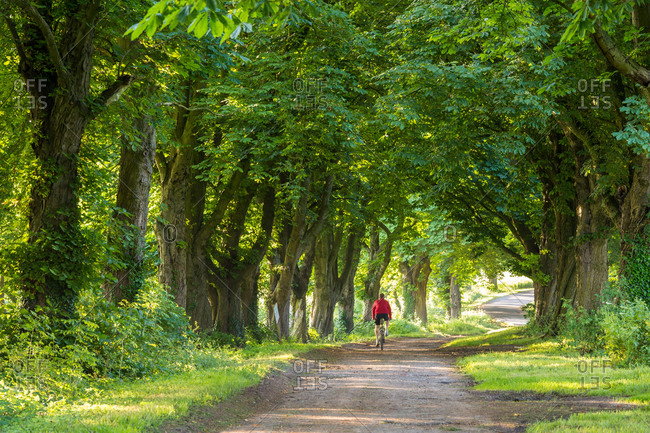 Rear view of person cycling through avenue of horse chestnut trees, Gloucestershire, UK.