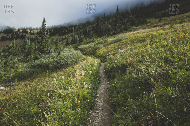 View of the Pacific Crest Trail through a remote alpine meadow