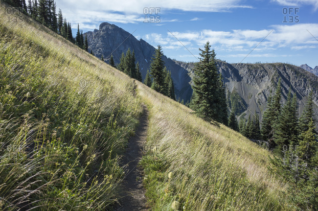 A steep hillside and forest on the Pacific Crest Trail