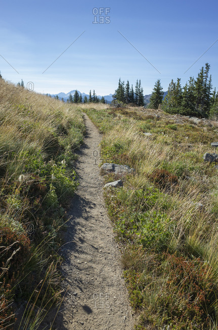 Path through alpine meadows in the mountains on the Pacific Crest Trail