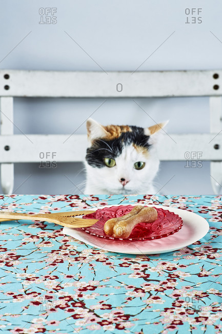 A cat at the table looking carefully at his bone on a plate