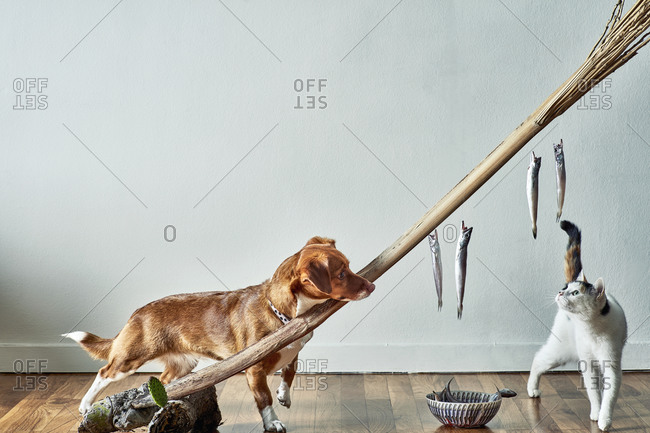 A dog and a cat fight over fish on a stick