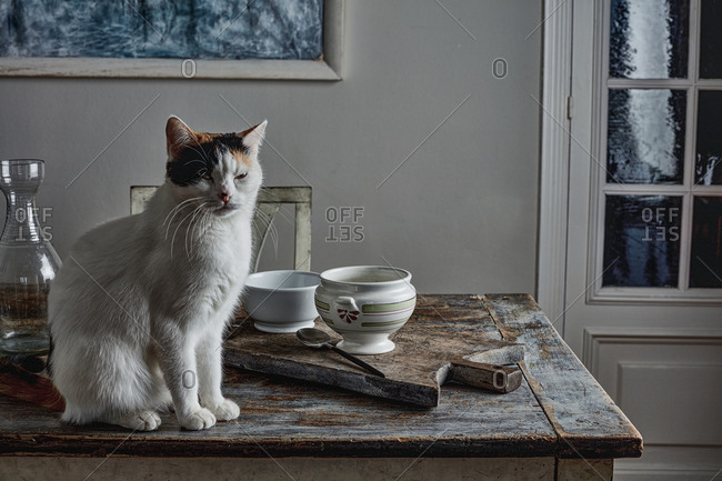 Cat sitting on a rustic supper table