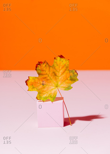 A single maple leaf on a cube on a pink and orange background